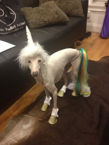 nigel-the-unicorn